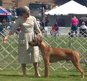 Tamu taking 4th Place Ribbon at DMKC Open Dog